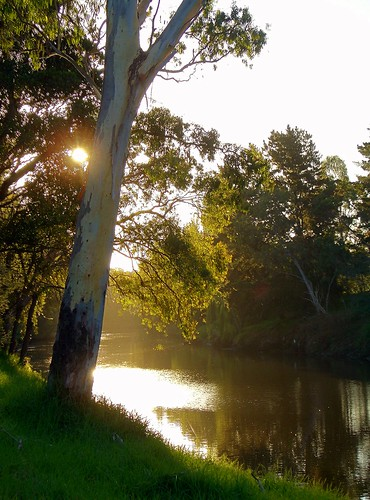 Tree over the Yarra
