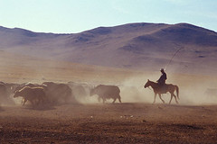 Mongolian Yak Herder