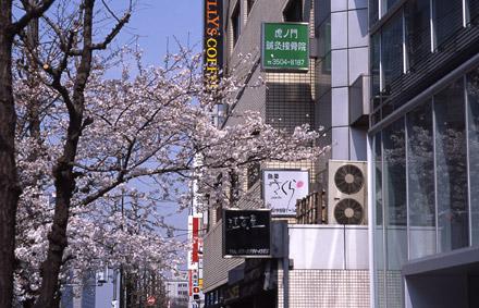 サクラだ、さくらだ、桜田で。