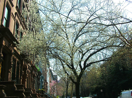 blossoms & brownstones