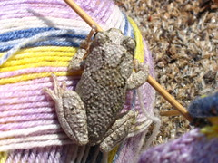 grey tree frog knits