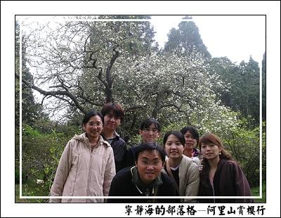 阿里山賞櫻行_櫻花樹下合影
