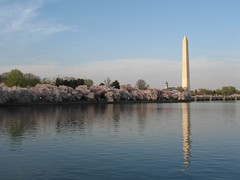Tidal Basin & Cherry Trees
