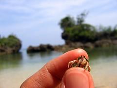 Me Got A Hermit Crab