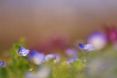 Spring of Fushamura.