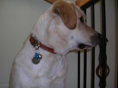 collar on the dog