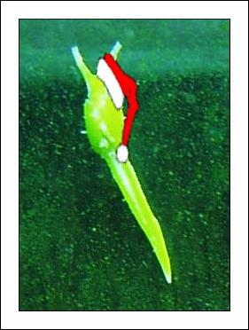 Santa slug