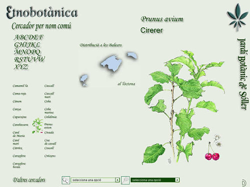 etnobotánica