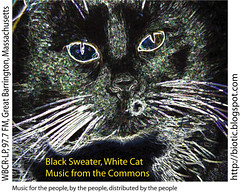 Black Sweater, White Cat