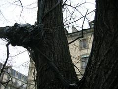 L'arbre Atchoum (2)