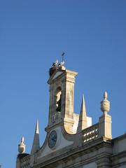 cegonhas / storks