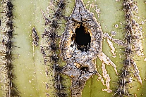 Saguaro Home