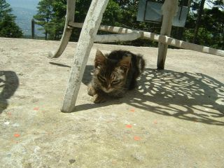 Cat in Volcan San Salvador