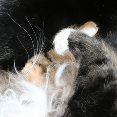 cat texture
