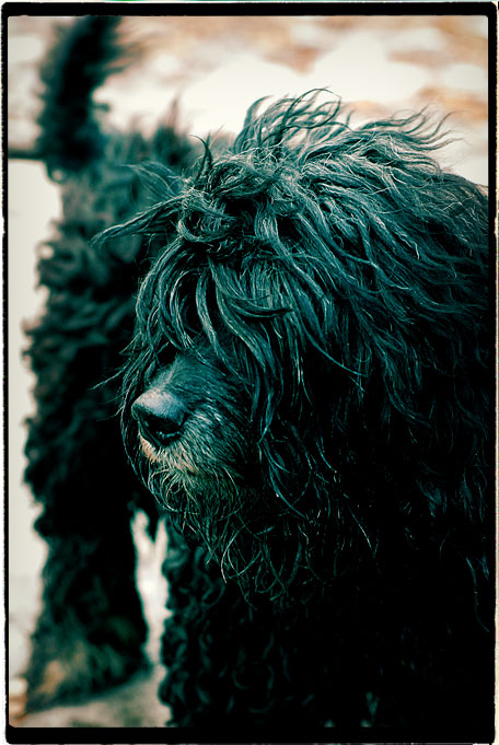 Dog-Portrait2