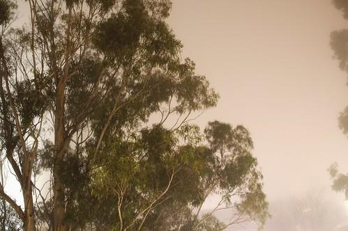 intense foggg