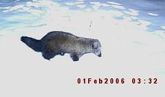 Fischer  02.01.0332
