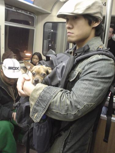 Dog. Backpack. Train.