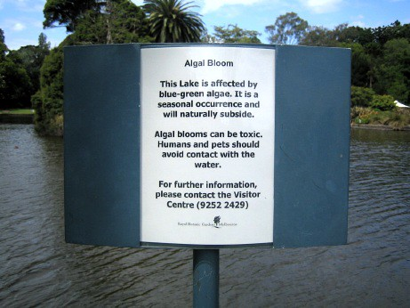 'Algal Bloom' sign (close)