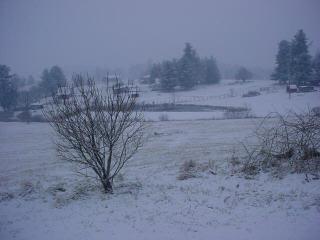 Snowy February Day