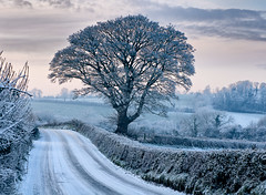 Ballybrannan tree photo by Sean Barden