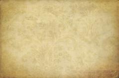 Wall flower #3 - (b)old beige photo by jinterwas