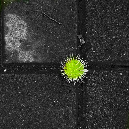 зеленое солце асфальта-3_новый размер