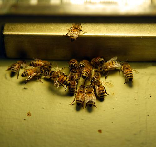 Bees under a porch light