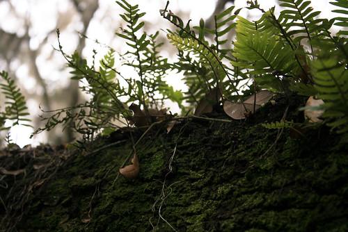 Got fern?
