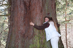 Bei den Mammutbäumen