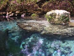 Gainer Spring, Econfina Creek Clearwater Canoe Trail, Florida photo by Phil's 1stPix