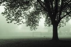 Run, Dog, Run... in the Green Fog (of Time) photo by Gilderic Photography