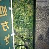 4533720113_fdb117c53c_t