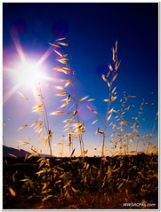 Summer's here! photo by California CPA