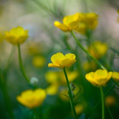 mellow yellow photo by kmam
