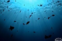 Devils of the Sea (Explored) photo by Ammar Al-Fouzan