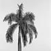 flexaret palm
