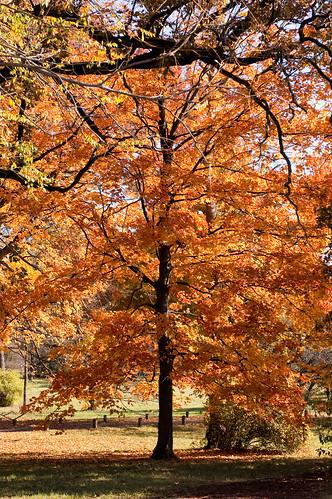 Morton Arboretum-3