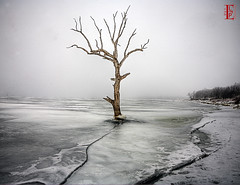 Ice, Fog, Tree photo by Kansas Poetry (Patrick)