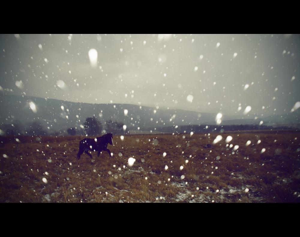 Horse In The Storm photo by Matt(ikus)