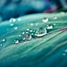 Cuba Gallery: nature / rain / water droplet / background texture / organic / natural / leaf / bokeh / macro
