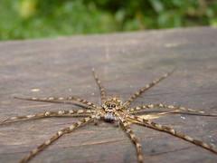 Creepy spider photo by sara.maia