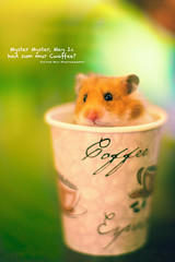 138/365 Hamster. photo by Victor Mui