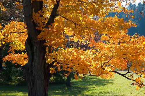 Morton Arboretum-1