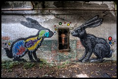 Roa - Hares photo by Romany WG