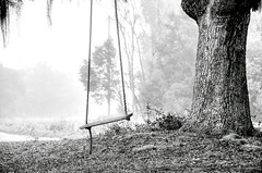 Coosaw - Tree Swing photo by Sco†† C. Hansen (TheHansenGallery.com)