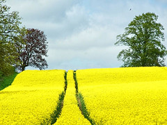 Yellow photo by algo