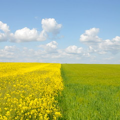 Yellow and green field photo by DIDS'