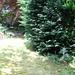 Garden Before VIII