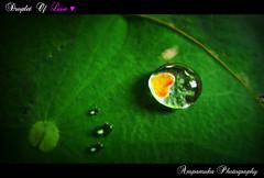 Droplet Of Love (Orange Heart On Water Drop) / หยาดหยดแห่งรัก (หัวใจบนหยดน้ำ) photo by AmpamukA